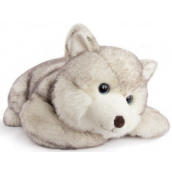 Histoire d'ours - Husky - 50 cm - HO2696